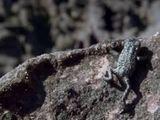 Video-Hot - Video: Cóc mưu trí lăn tự do xuống vách đá để trốn nhện săn mồi
