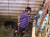Đường dây trộm hơn 100 tấn chó ở Thanh Hóa: Đào cả hầm