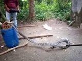 Video: Hãi hùng hổ mang chúa dài gần 5 mét trốn trong nhà vệ sinh