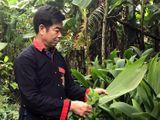 Người uy tín ở bản Dao Yên Sơn giúp bà con làm kinh tế, xóa bỏ tập tục lạc hậu
