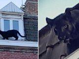Đồng Nai: Xác minh thông tin xuất hiện 2 con báo đen