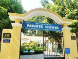 Vụ chi phí hơn 230 triệu chặt, tỉa cây tại trường Marie Curie: Công ty cây xanh TP.HCM nói gì?