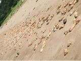 Video-Hot - Video : Hàng nghìn chiếc chân giò lợn dạt vào bờ biển Trung Quốc không rõ nguyên nhân