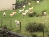 Video-Hot - Hiện tượng kỳ lạ: Bầy cừu hàng trăm con đột ngột đứng bất động như bị thôi miên