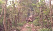 Cận cảnh bãi tập kết cây xanh vừa bị chặt ở Hà Nội