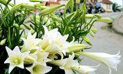 Mê mẩn vẻ đẹp của những loài hoa tháng Tư