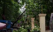 Hà Nội: Cành xà cừ lớn đổ vào nhà hàng sau cơn mưa