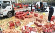 Cảm động người dân giúp đỡ lái xe bị đổ hàng ngàn quả trứng giữa đường