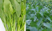Những loại rau củ mùa hè