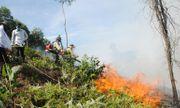 Nghi vấn đốt ong đốt luôn hàng chục héc ta rừng