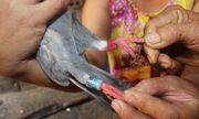 Quảng Nam: Bắt được chim có kí tự lạ