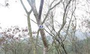 Rừng sưa ngàn cây và cuộc chiến khốc liệt ở Thanh Hoá