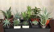 Top cây trồng có tác dụng làm sạch không khí nên trồng trong nhà