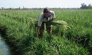 Tự tạo cơ hội: Làm giàu từ trồng huệ trắng