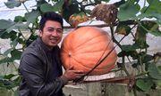 Bí ngô khổng lồ, 5 triệu/quả khách tranh nhau mua trang trí Halloween