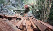 """Truy tìm """"đầu nậu"""" phá nát rừng đặc dụng Phong Quang"""