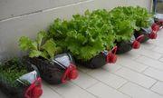 Bỏ túi ngay 7 cách tái sử dụng chai nhựa trong làm vườn