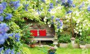 Khu vườn hoa nở suốt bốn mùa đẹp như trong mơ