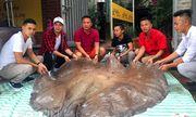Cá đuối khổng lồ nặng 216kg xuất hiện ở Hà Nội, giá 1,2 triệu đồng/kg