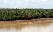 TP. HCM rót hơn 1.100 tỷ đồng vào khu Đông Sài Gòn để xây cầu, nạo vét sông