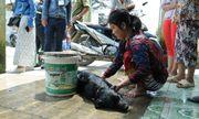 Cận cảnh chó gà chết la liệt, cây xanh héo rũ do nhiễm khí độc ở Sài Gòn