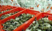 Xuất khẩu tôm bước tiến mới cho nông sản Việt