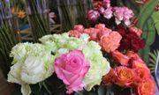 """Hoa hồng được dịp """"thét"""" giá, Socola trong hộp iPhone X hút khách ngày Valentine"""