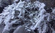 Rét nàng Bân, tuyết phủ trắng đỉnh Fansipan