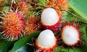 Lần đầu tiên chôm chôm Việt vào được thị trường New Zealand