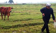 Vụ trâu bò ăn cỏ phải đóng phí: Trả lại cho dân trước ngày 30/4
