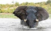 Video: Con voi nổi điên tấn công thuyền của du khách