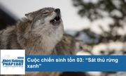 Video: Những bí mật khiến sói trở thành