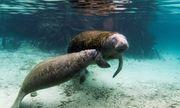 Mexico khởi động điều tra tìm nguyên nhân bí ẩn khiến 'nàng tiên cá' chết hàng loạt