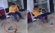 Video: Rắn dài 1,8m đột nhập đồn cảnh sát, chồm lên cắn người
