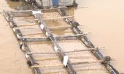 Đồng Nai: Vừa nhận tiền hỗ trợ, người dân dọc sông La Ngà lại nhận tin cá chết trắng bè