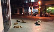 Bầy chó hốt hoảng chạy theo xe cứu thương chở ông chủ bị đột quỵ tới bệnh viện