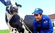 Vinamilk sẵn sàng chi 1.500 tỷ chào mua 47% cổ phần công ty sở hữu Sữa Mộc Châu