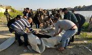 Thảm họa chìm phà tại Iraq: Con số tử vong lên tới gần 100 người