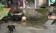 Vụ cháu bé 7 tuổi bị đàn chó cắn tử vong: Chủ vật nuôi có thể bị truy cứu trách nhiệm hình sự