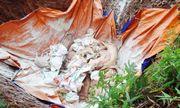 Quảng Ninh: Cảnh cáo 2 cán bộ chỉ đạo chôn lợn chết ở sân bóng đá