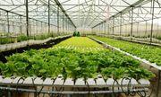 Lấy công nghệ cao làm động lực phát triển nông nghiệp Thủ đô