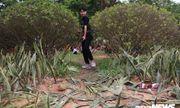 Du khách hả hê giẫm đạp không thương tiếc hàng cây xanh tại lễ hội Đền Hùng