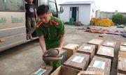 Hà Tĩnh: Phát hiện, bắt giữ xe khách vận chuyển trái phép tê tê, rùa cùng hơn 4 tạ gỗ quý