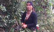 Hà Nội: Nổi tiếng bài thuốc chấm dứt bệnh đau xương khớp của người Dao quần chẹt núi tổ Ba Vì