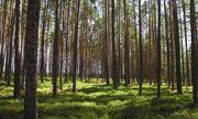Học sinh Philippines phải trồng 10 cây xanh mới được tốt nghiệp