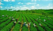 Geofarmer hệ thống giám sát và phản hổi trong các dự án phát triển nông nghiệp (Kỳ II)
