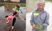 30 công nhân xuống ruộng cấy lúa giúp cụ ông giữa trời nóng 40 độ