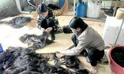 """Nhà tiền tỷ chứa """"tóc dài, tóc rối"""", nông dân xuất ngoại như… đi chợ"""