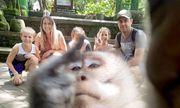 Khỉ cũng biết selfie và giơ ngón tay giữa gây bão mạng