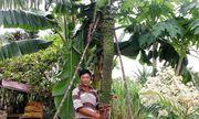 Video: Chiêm ngưỡng cây chuối